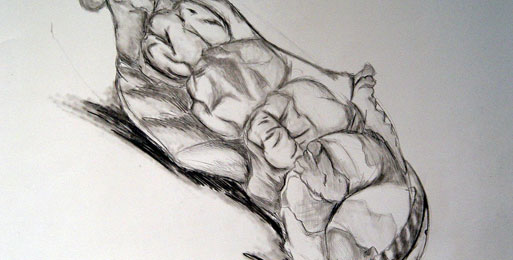 still life drawing. Bone - Still Life Drawing
